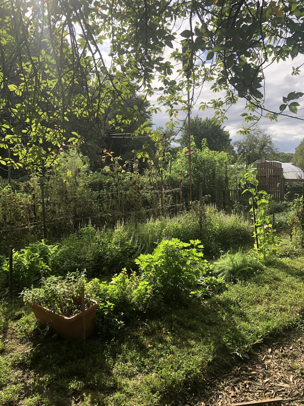garden year 1